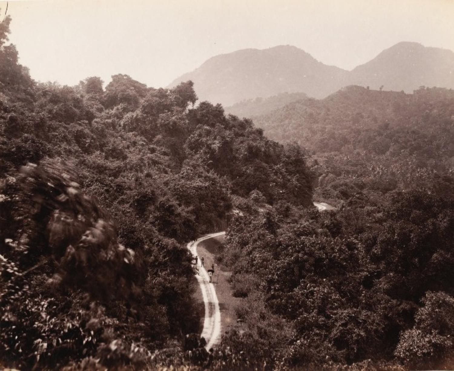 On the way to Candy from Colombo Ceylon C1880