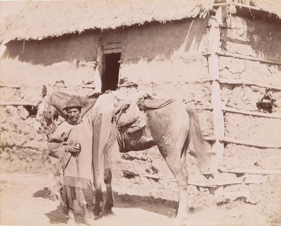 A Gaucho with His Horse Argentina C1890