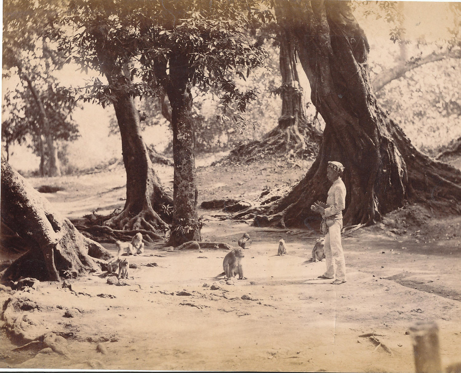 Feeding the Monkeys  Batavia Indonesia . C1885