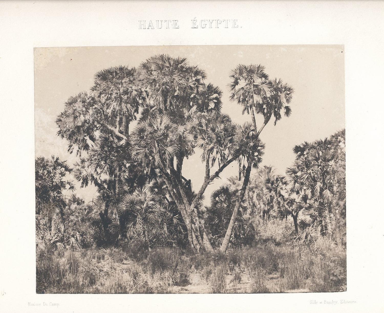 Palm Tree Egypt 1852 Maxime Du Camp