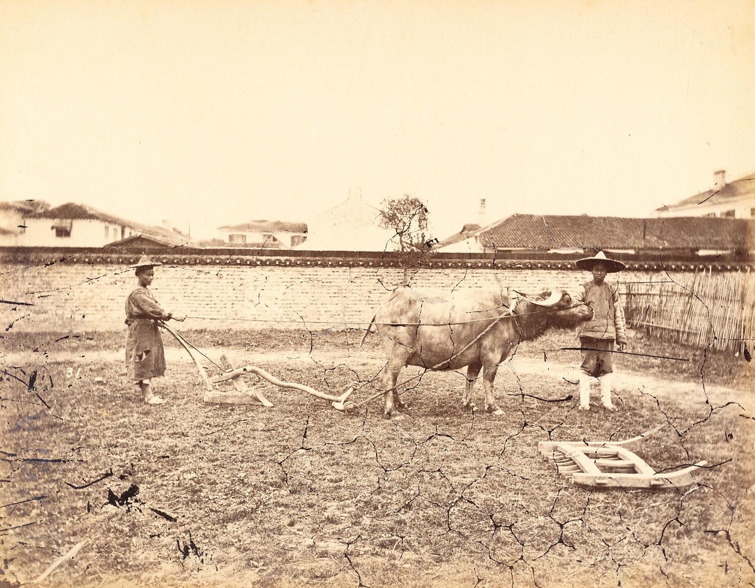 Farmer Polwing the Field Shanghai China William Saunders