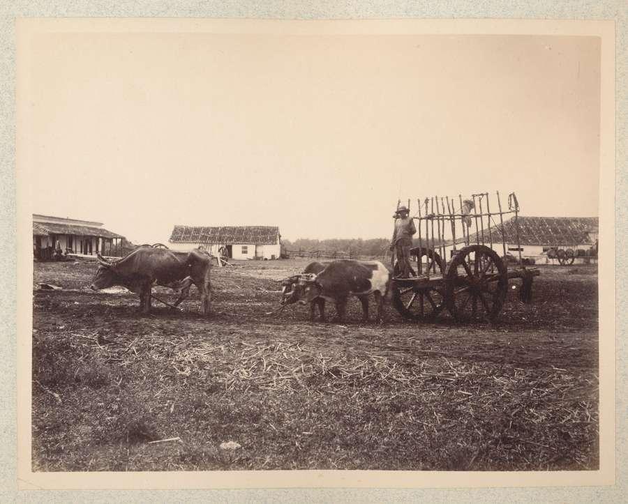 Ox Cart ManHavana Cuba C1885