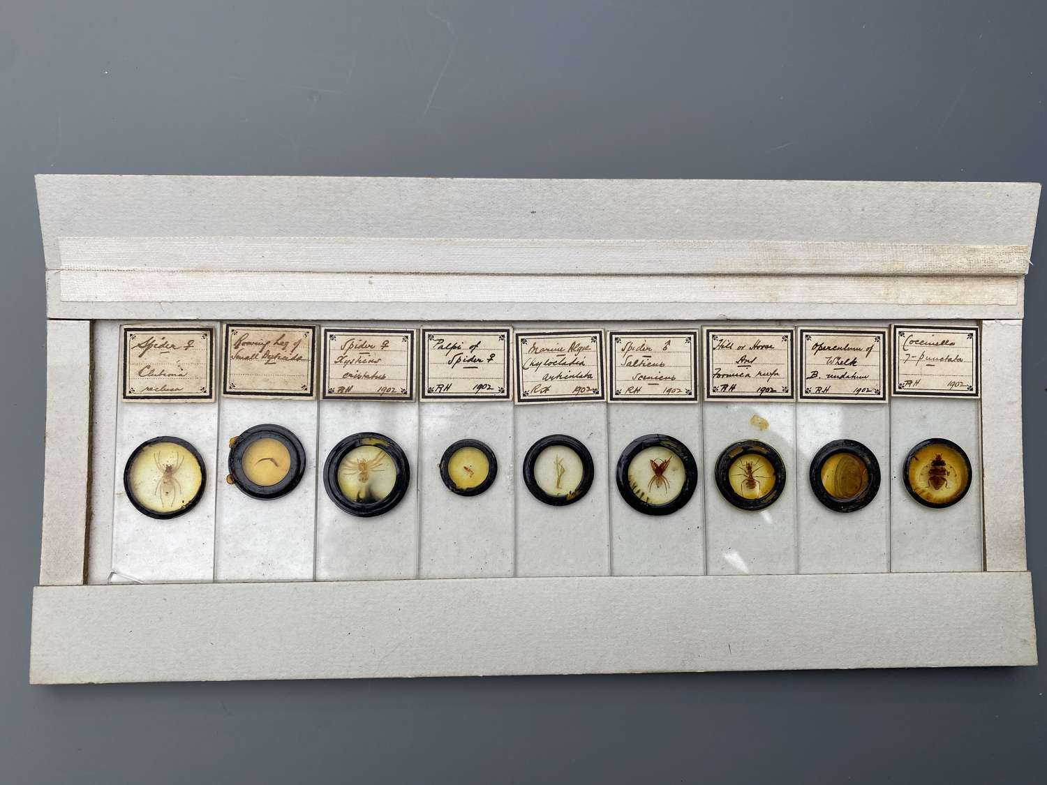 Box of 54 Microscope Slides Entomology. R H. Richard Hancock 1902-03