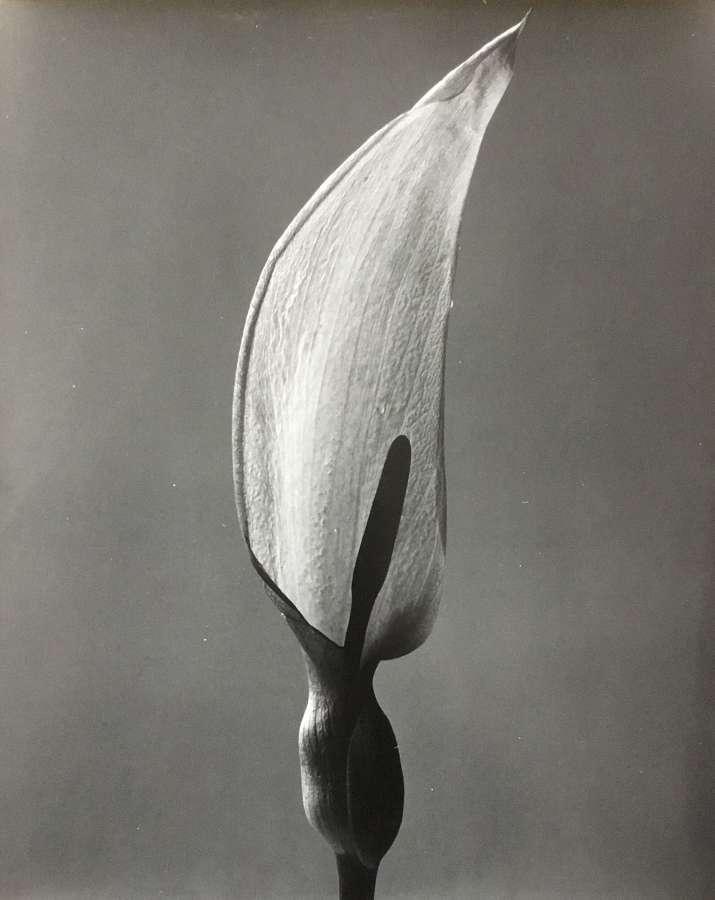 Still Life , Penelope Ellis England C1950