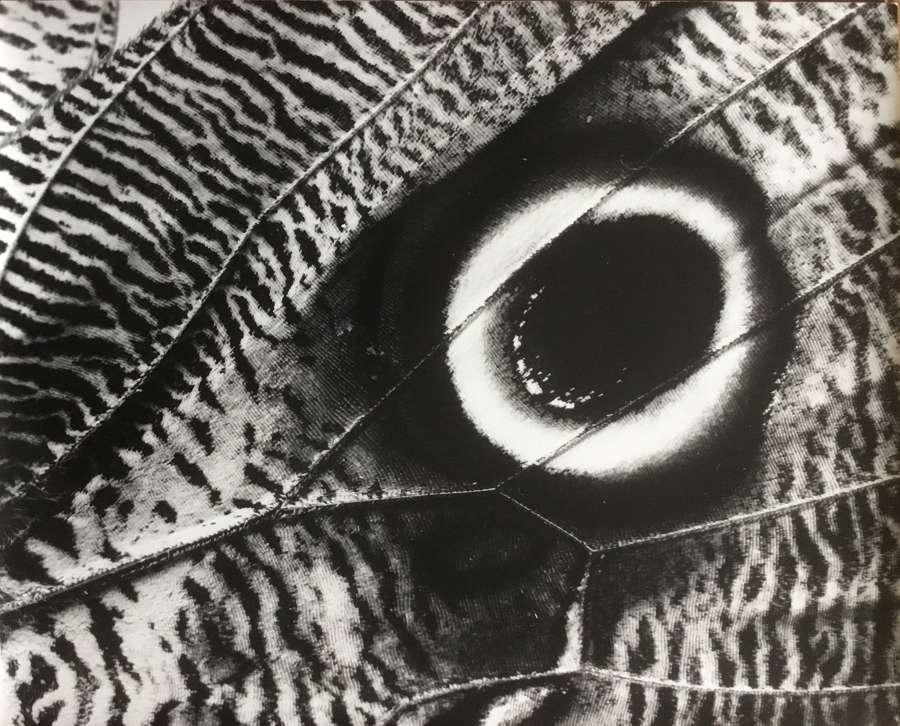 Butterfly , Penelope Ellis England C1950