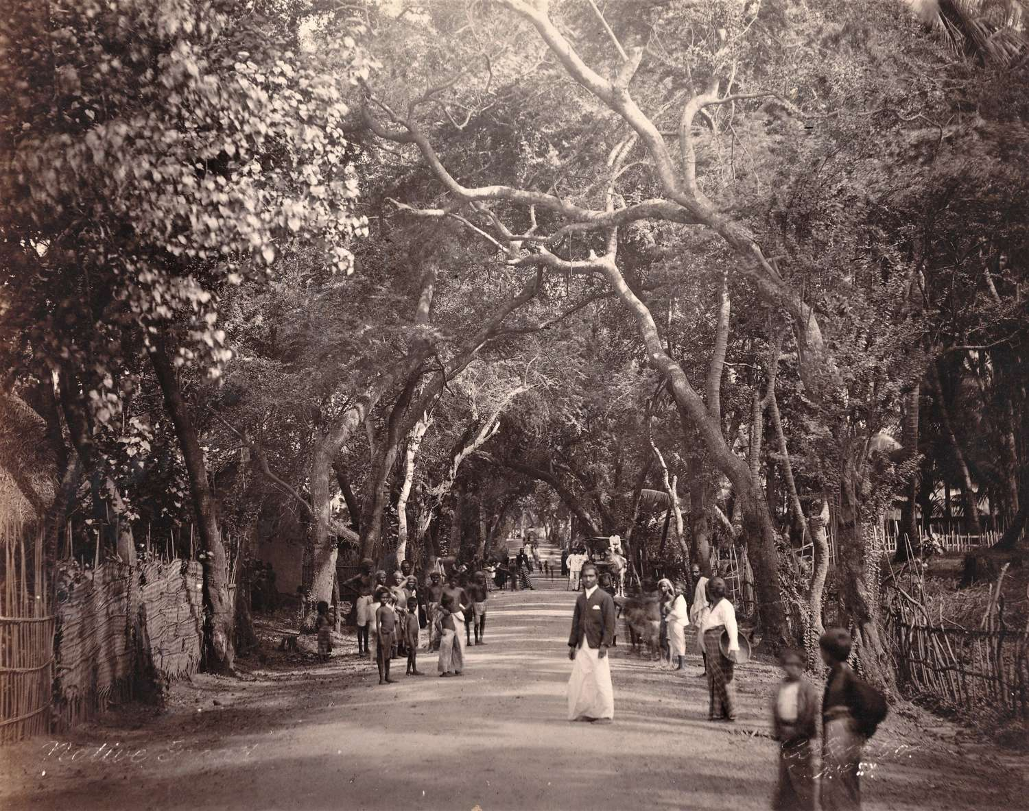 Native Street Colombo Ceylon C1890