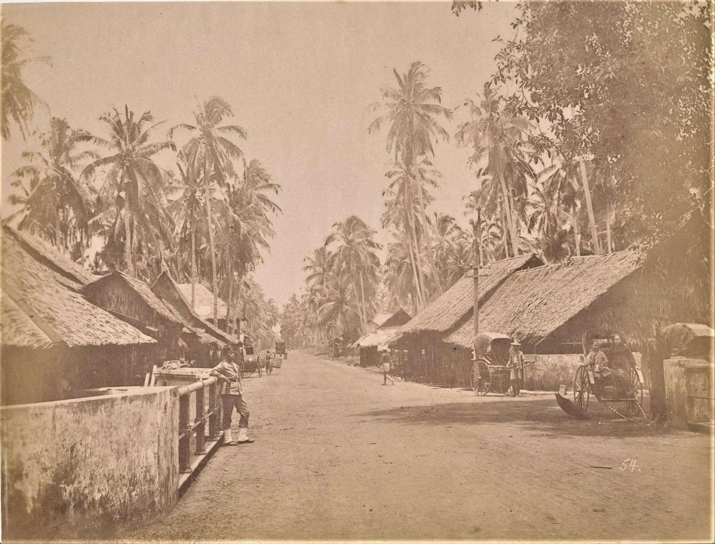 Coconut Plantation Penang, Malaysia Singapore C1890