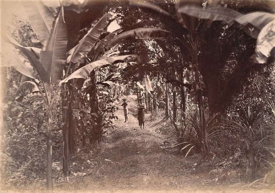 Two Native Men in Fiji C1880