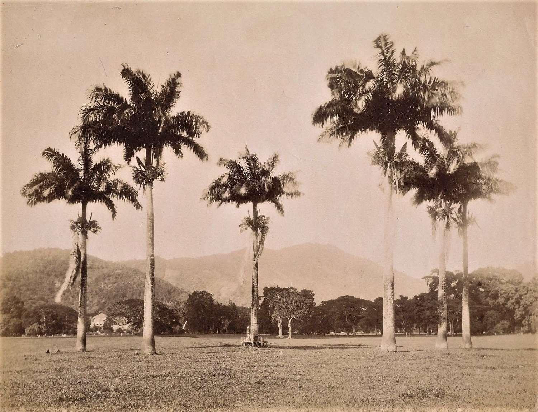 View of Savannah Trinidad C1880