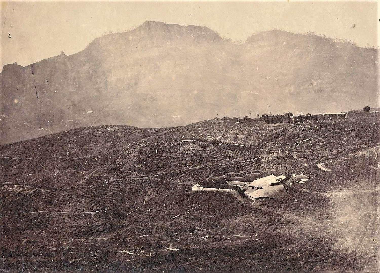 PhotoA Tea Plantation, Ceylon 1860