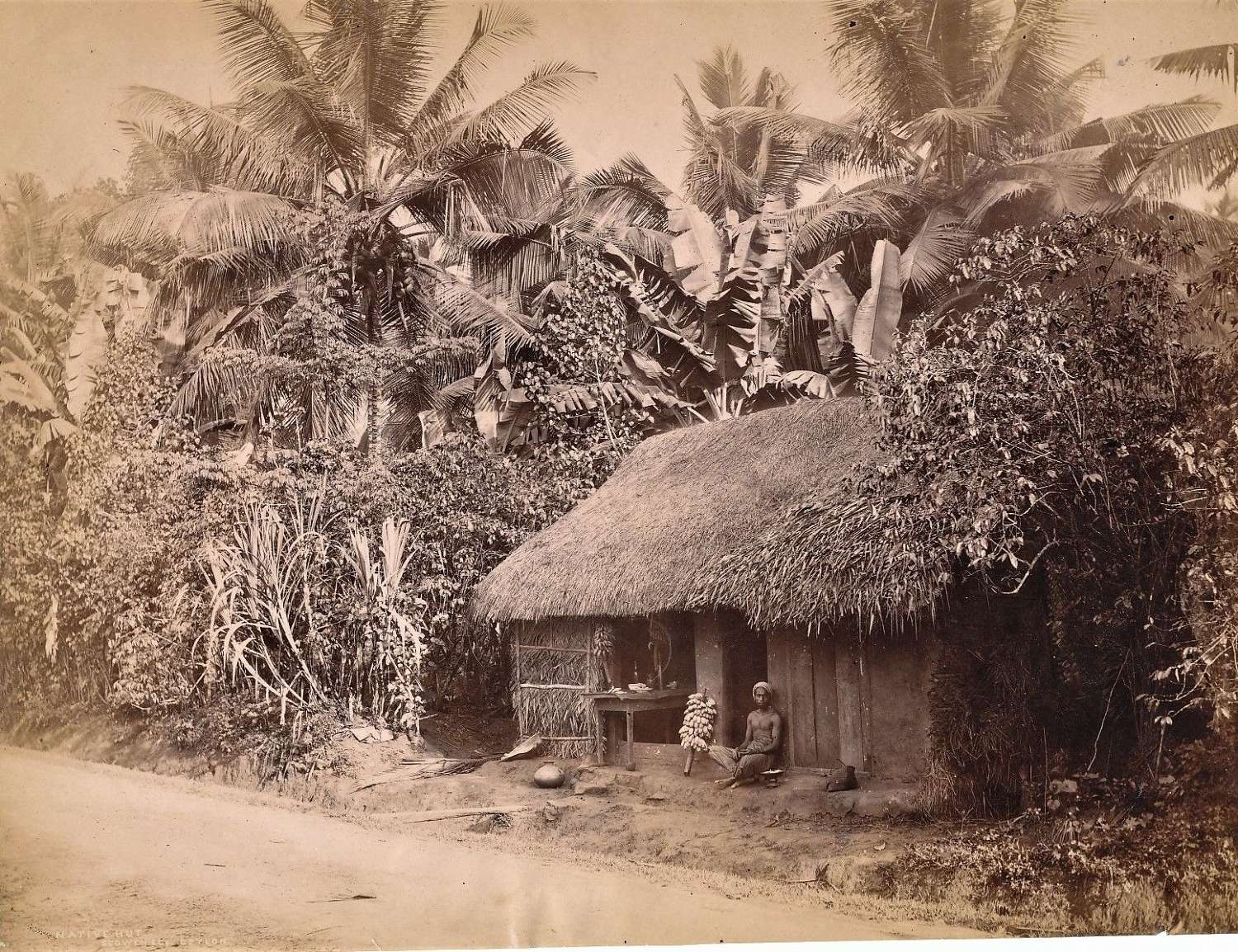 Native Hut Ceylon By Scowen & Co C1880
